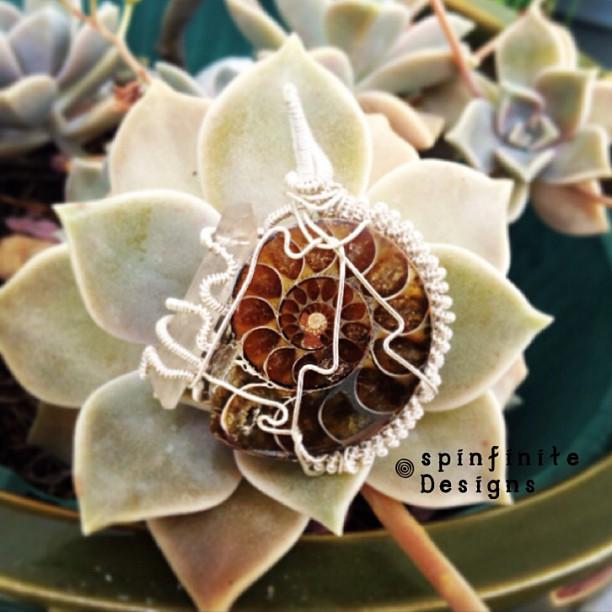 ammonite / lemurian seed crystal
