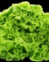 green leetuce.png