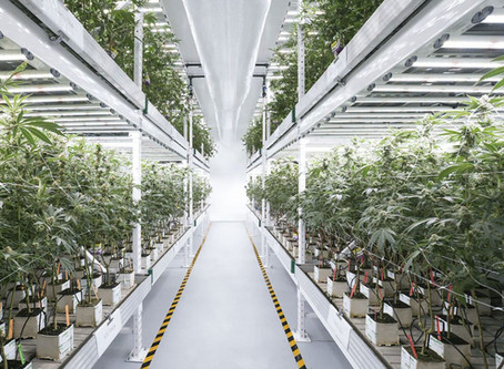 CO2 considerations for Vertical Farming