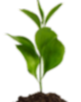 young plant image.png