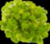 microgreens.png