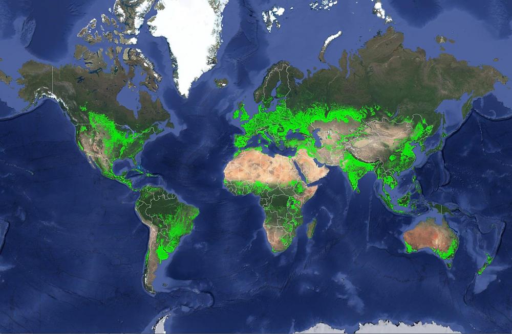 world cropland map