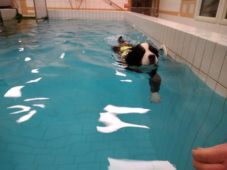 Simning för både Chili och Lussan