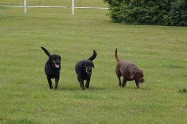 """Hunde """"patruljen"""" Bumle, Alfred og Alma - de passer på gården og er altid klar på en godbid og lidt nusseri"""