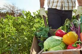 Agricultura sustentável, levando produtos mais saudáveis à mesa