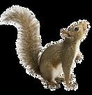 squirrels_02_edited_edited.png
