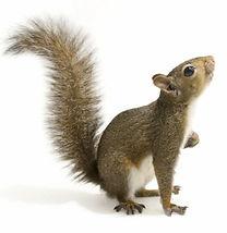 squirrels_02_edited.jpg