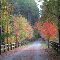 bike path in fall