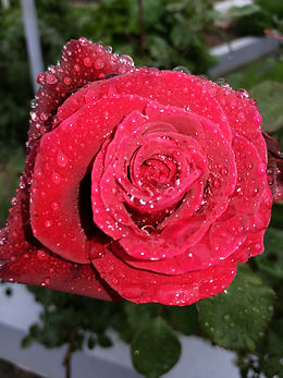 vrtnica Špela.jpg