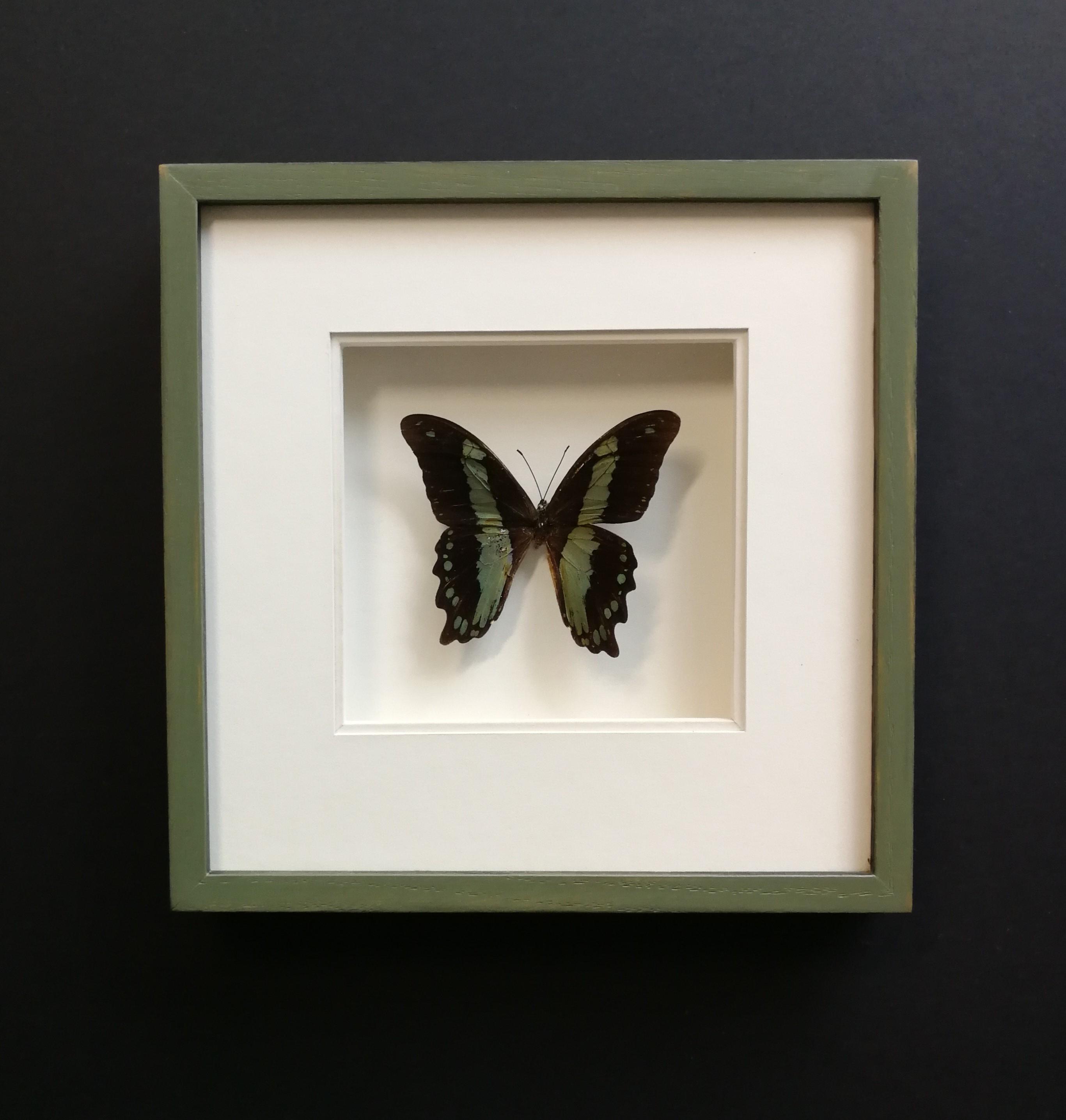 Encadrement papillon-art'encadre