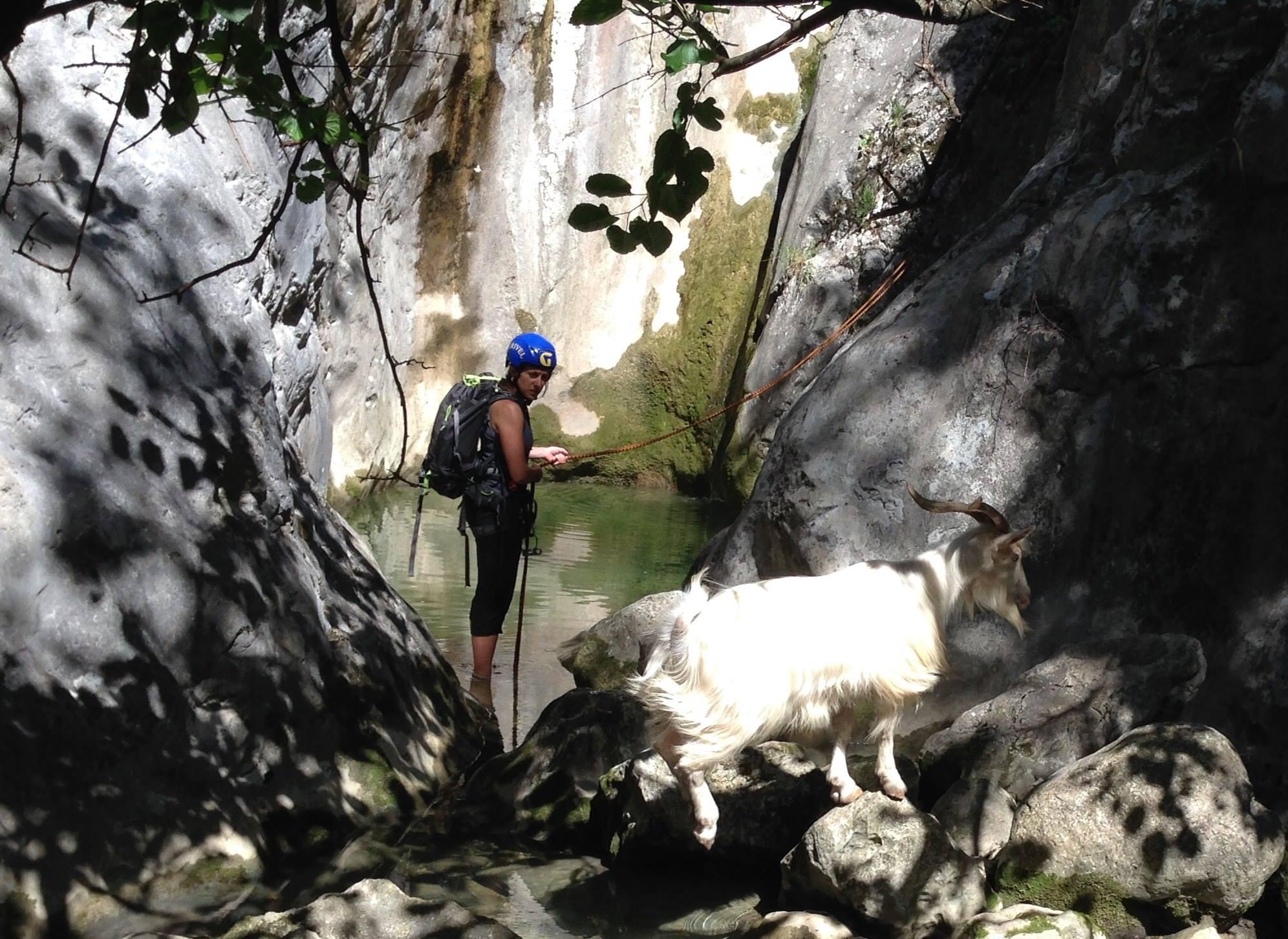 Goat rescue mission was a success!!!