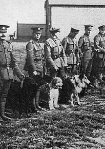 British War Dogs School Image