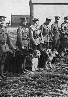 British War Dogs School Image