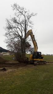Déplacement d'arbres