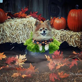 Bella D. Halloween Mini Session