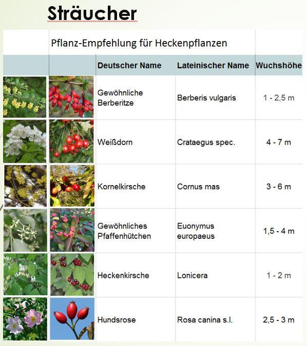 18-01-24 - Empfehlung_Heckensträucher_S1