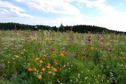 Blühstreifen / Blühflächen in der Landwirtschft