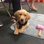 puppy in class.jpg