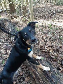 Dog Walking Southborough