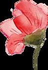 Home_FlowerBorder_FrontLeft_trimmed.png