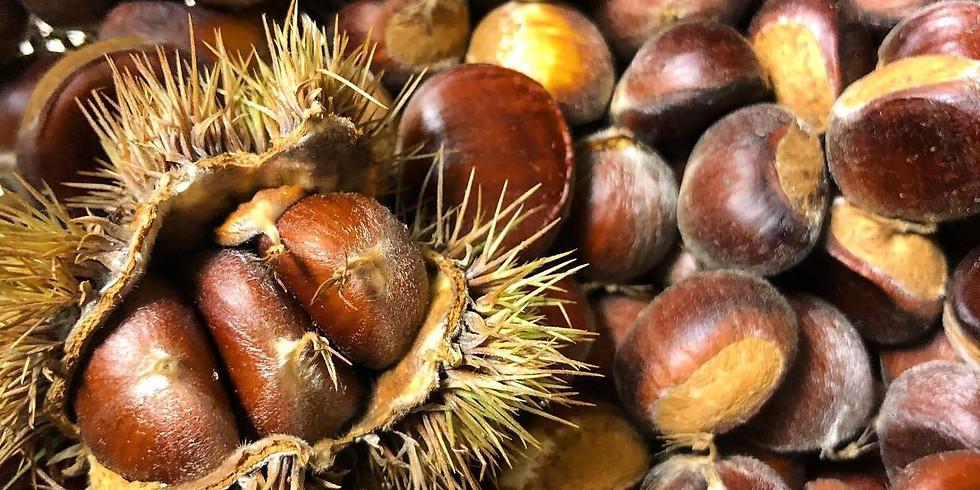 Early Fall Herbs & Wild Foods Walk