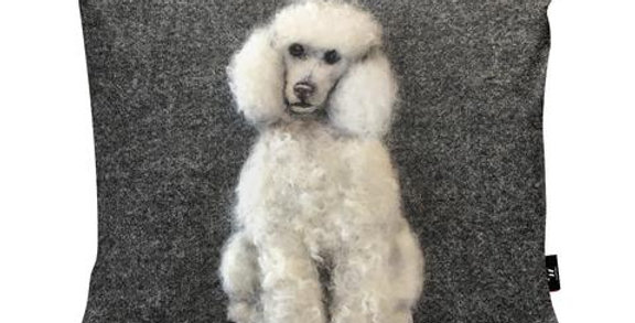 Poodle by Sharon Salt
