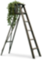 homepage_ladder.png
