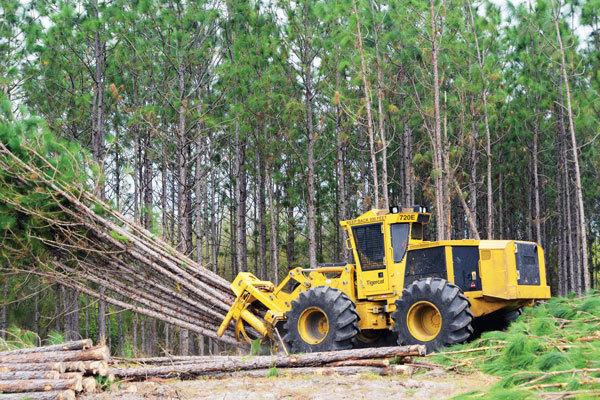 Tigercat-JunBMM16_14634110402191.jpg