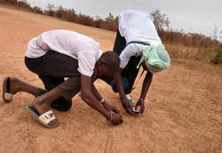 looking for ants, Salikenni.crop.jpg