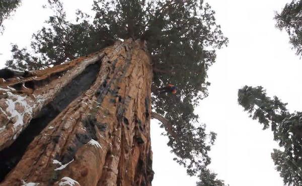 ต้นไม้ที่มีอายุกว่า 3,200 ปี หน้าตาจะเป็นยังไง มาดูกัน