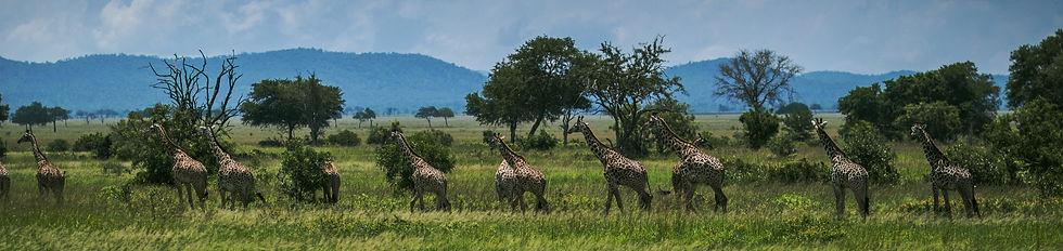 Mikumi Safari Lodge_Activities-04.jpg