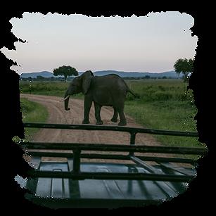 Mikumi Safari Lodge Web-02.png