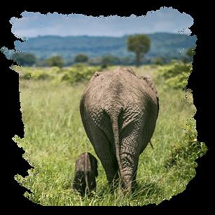 Mikumi Safari Lodge Web-05.png