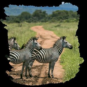 Mikumi Safari Lodge Web-04.png