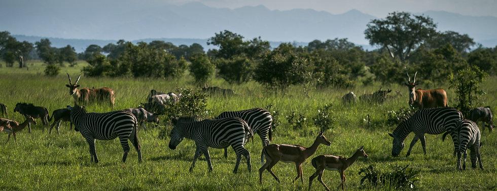Mikumi Safari Lodge_Safaris-04.jpg