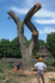 Brookings SD tree care