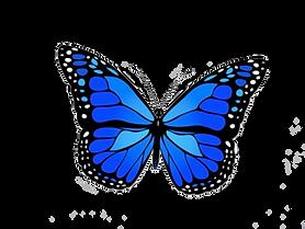 blue-butterfly-1001568835120dxfggzgv0h.p