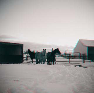 017_Z_HORSES MONTANA SNOW WIDE SHOT MOUN