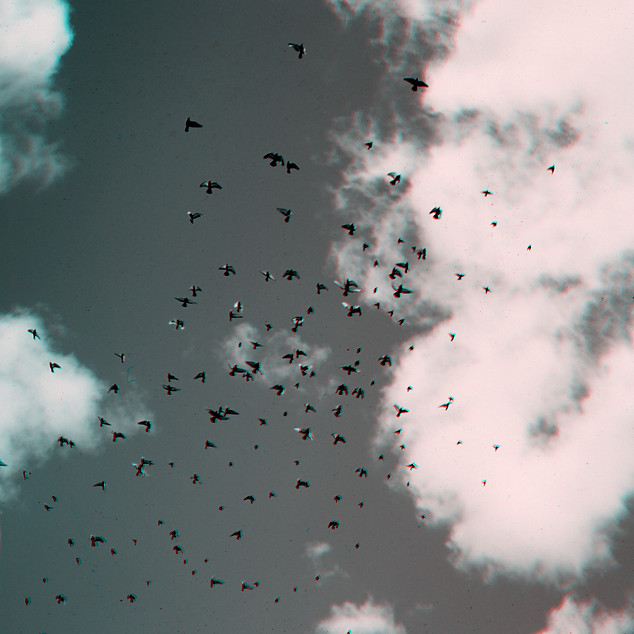 012_Z_PIGEONS BIRDS FLYING_ANAGLYPH.jpg
