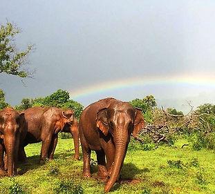 Exotic Thailand