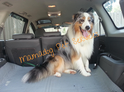 Pet Taxi(1).jpg 2013-7-28-14:7:40