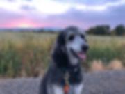 Mira Sunset 092018.jpg