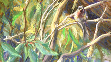 Pastel Painting: Leaden flycatcher