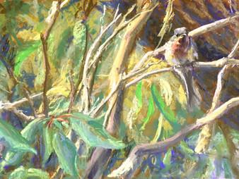 Pastel Painting: Leaden flycatcher
