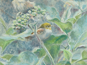 Pastel painting: Silvereyes in wild tobacco