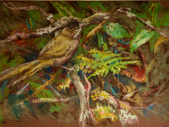 Pastel Painting: The young whipbird