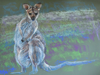 Pastel Painting: Red-necked wallaby