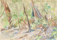 Pastel Painting: Young lyrebirds