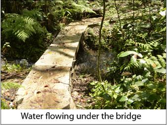 Our rainforest garden:  Water under the bridge