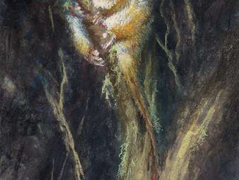 Pastel Painting: Ringtail possum